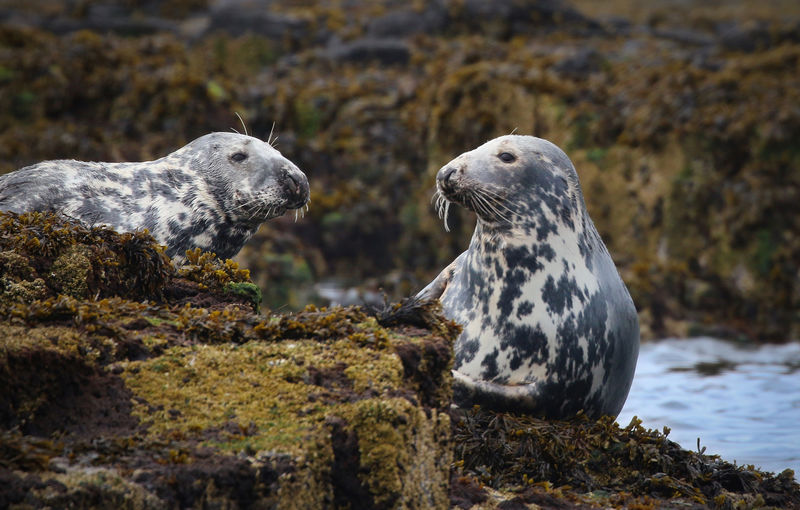 Close-up of seals in water