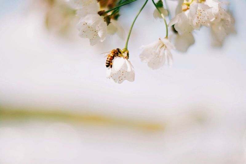 Searcing for Nectar The Explorer - 2014 EyeEm Awards Bokeh Close Up Vscocam Market Bestsellers July 2016 Bestsellers
