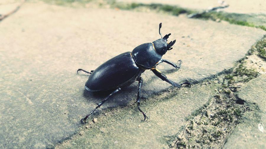 Bug Check This Out animals Taking Photos natural beauty Hi! Black Hidden Gems
