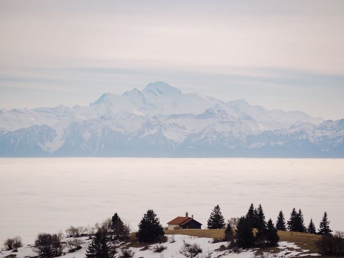 Swiss Alps Creux Du Van Sea Of Fog Tree Mountain Scenics - Nature Beauty In Nature Plant Mountain Range Sky Nature Tranquil Scene Landscape Tranquility Cold Temperature Snow Winter Travel Destinations Outdoors