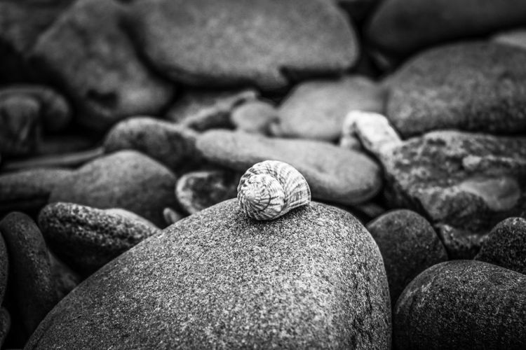 Full frame shot of shell on rock