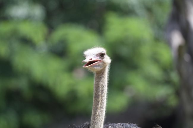 LW Animal Themes Animal Wildlife Animals In The Wild Beak Bird Close-up Day Focus On Foreground Nature No People One Animal Ostrich Outdoors