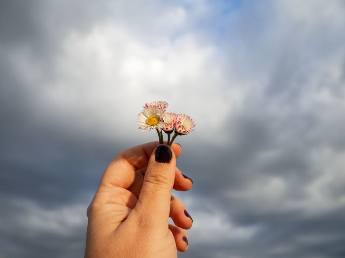 Close-up of hand holding red flowering plant against cloudy sky