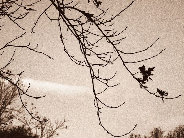 Branches And Leaves Connected With Nature Hiking_walking Backlight Outdoor Photography EyeEm Nature Lover Inspired By Nature Nature Is Art A Moment Of Zen... Creative Light And Shadow Details Of Nature From My Point Of View Protecting Where We Play Details Textures And Shapes Relaxing Moments Artistic Expression Evening Glow Old Times... Check This Out Walking Around Artistic Photo Abstract Art Tree Silhouette