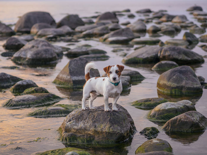 View of dog on rock at beach