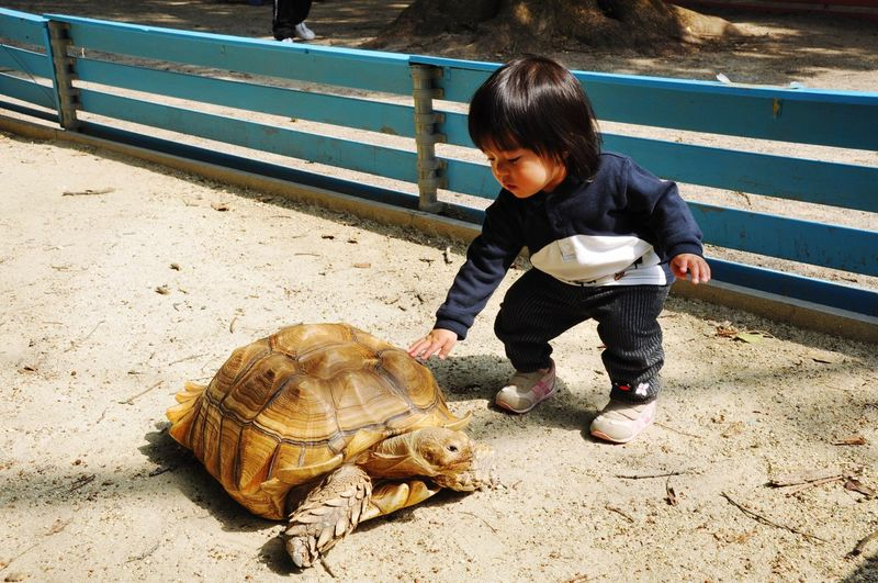 Cute Boy Playing With Tortoise On Sand