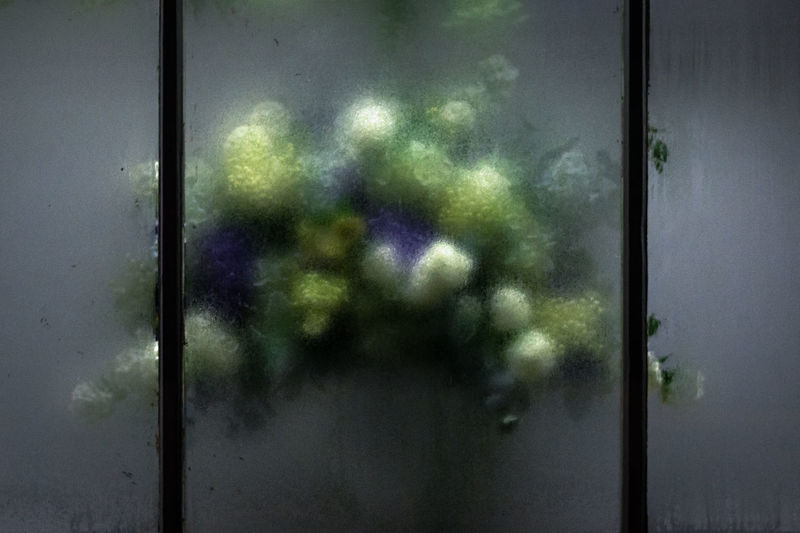 Boquet Boquet Boquet Of Flowers Condensation Condensation On A Window Decoration With Flowers Flower Shop Flowers No People Window
