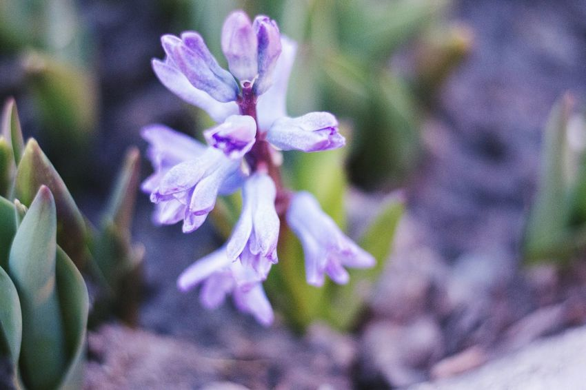 Moscow VDNH Bealtiful Nature Purple Flower Beauty In Nature Flower Head Blue
