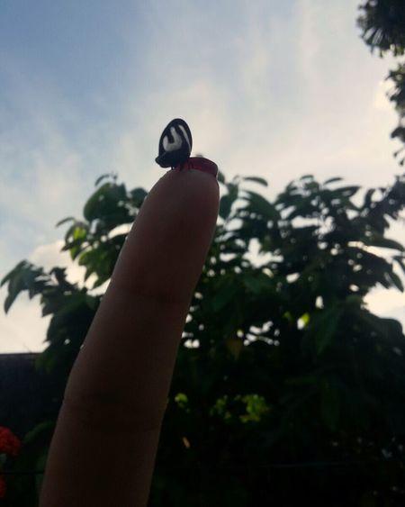 Human Hand Bird Perching Sky Close-up