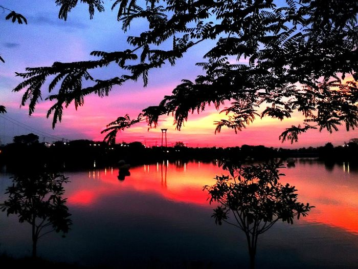 Red sky after sunset Red Sky At Sunset Red Sky's And Trees Light And Shadow Sunset Silhouettes Sunset View. Sunset Sky Standing Water Black Swan Waterfront Swan Branch Refection Reflection Lake Countryside Lakeside Reflecting Pool Boat Lakeshore Rippled