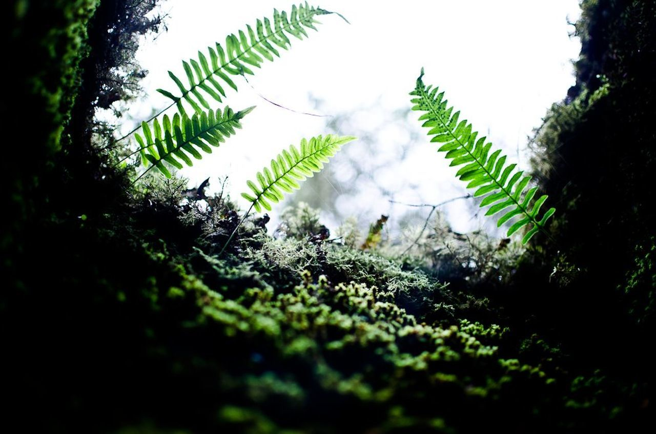 growth, plant, green color, nature, selective focus, day, no people, close-up, outdoors, fern, fragility, beauty in nature, freshness