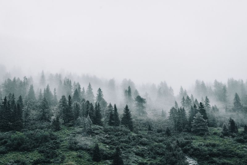SCENIC VIEW OF TREES AGAINST Foggy SKY