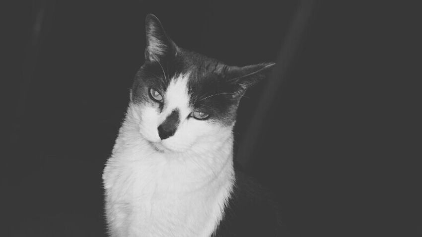 Up To Something Mischievous Spoiledlittleshit Blackandwhite Photography Tadaakitties Look At Me! Hi! Cat Lovers EyeEm Gallery