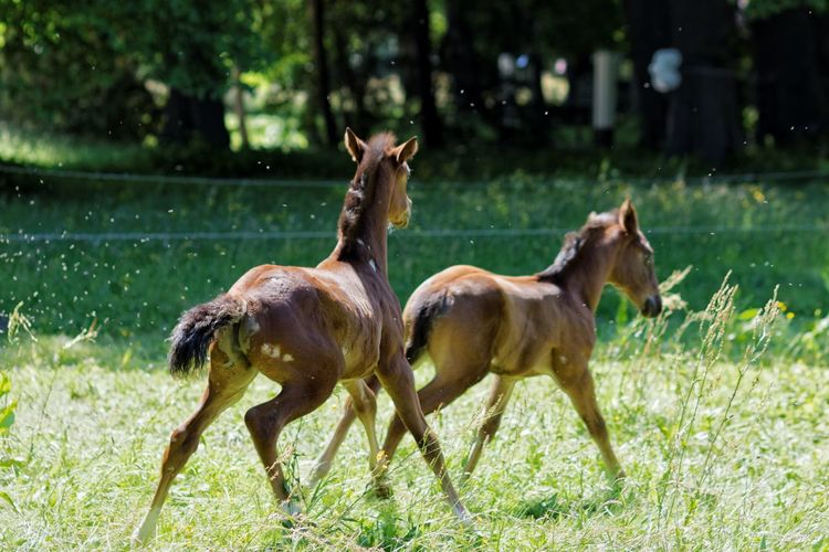 Playing With The Animals Foals Young Wild And Free(; Horses Capturing Movement