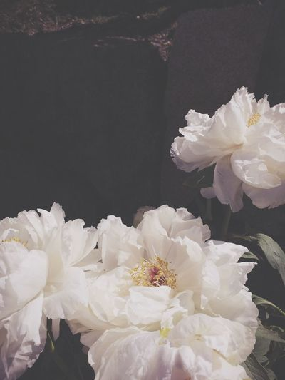 peonies also