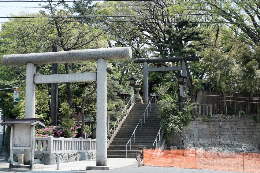 船橋大神宮 Fujifilm Fujifilm X-E2 Fujifilm_xseries Funabashi Japan Japan Photography Shrine 日本 神社 神社仏閣 船橋 船橋大神宮 船橋市