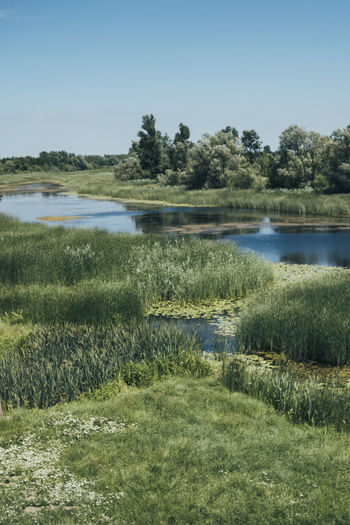 Water Grass Sky Lake Nature Tranquility Beauty In Nature Plant Scenics - Nature Environment No People Clear Sky Growth Green Color Tranquil Scene Day Tree Landscape Land Outdoors