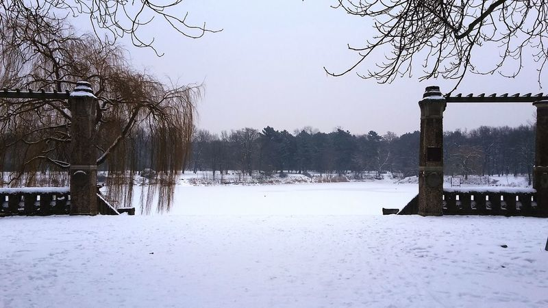 Relaxing Enjoying Life Its Cold Outside Wintertime Winter Silence Pure Nature Winter Wonderland Rotehornpark Meine Stadt Mein Magdeburg Magdeburg Stadtpark