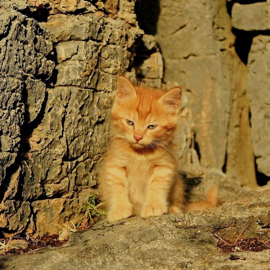 One Animal Feline Pets No People Outdoors Nature Portrait Day Grèce, Greece, Real Colors Built_Structure Backgrounds Architecture Old Ruin Let's Go. Together.