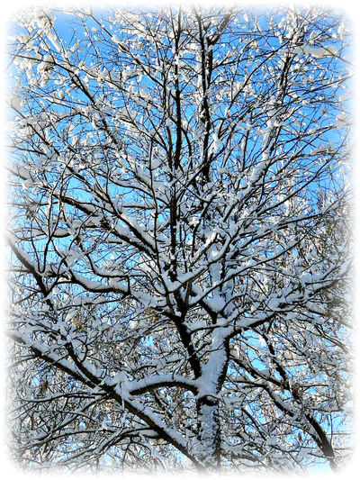 Bare Tree Branch Cold Cold Temperature Frozen Nature Snow Tranquility Tree Weather Winter Springfield, Nebraska