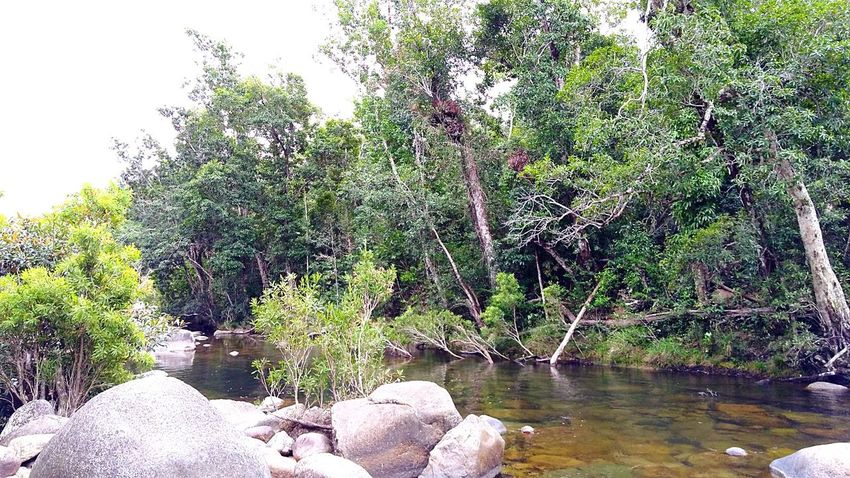 Outdoors, Outside, Open-air, Air, Fresh, Fresh Air, Scenics Beauty In Nature Natural Light Water Reflection No People Day Tranquility Natural Photography Rainforest Australia Breathing Space