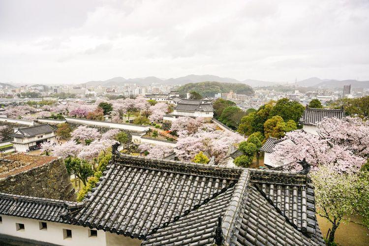 Himeji Castle EyeEm Japan Castle Tree Beauty In Nature Eyeemphoto No People Eyeemphotography Cloud - Sky Sky
