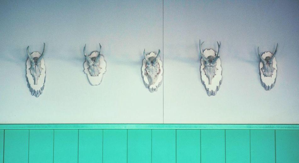Mounted deer antlers on wall