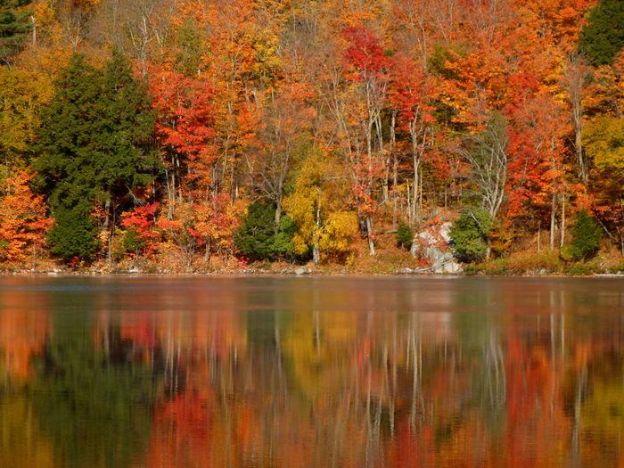 Calm Lake Against Orange Trees During Autumn
