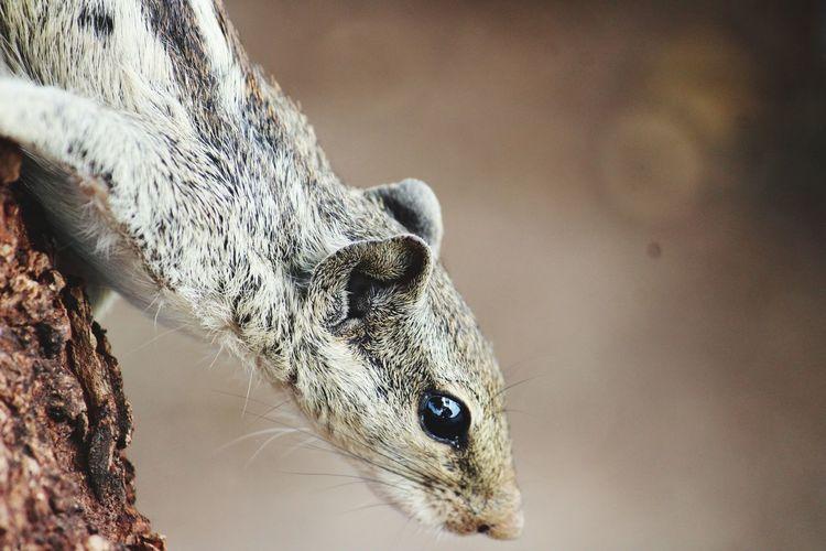 Squirrel's eye sensation