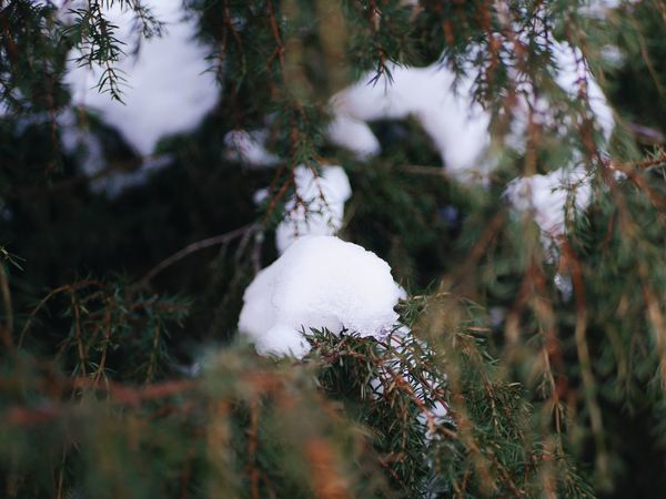 green Tree Nature No People Outdoors Forest Landscape Snow Winter Day Cold Temperature Close-up Beauty In Nature Plant Weather Winter Tree Beauty In Nature Branch Frozen Ice Snowing Growth Nature Green