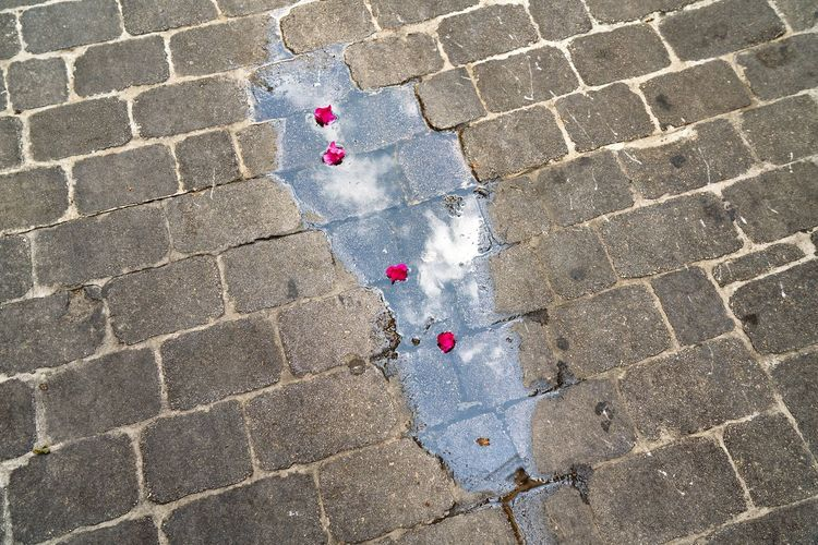 High angle view of rose petals in water on footpath