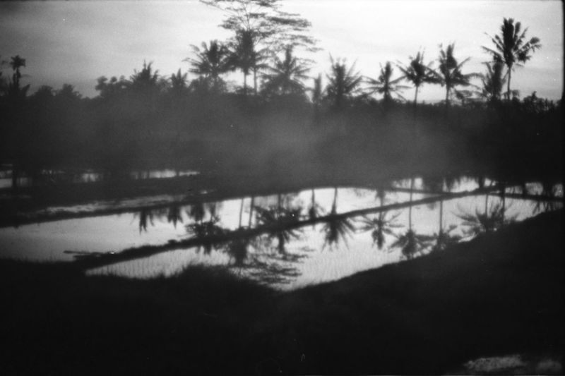 bali through the smoke 35mm Film Bali Bali, Indonesia Beauty In Nature Day Filmisnotdead Fog Hazy  Album Cover Landscape Mist BYOPaper! Newtopographics No People Outdoors Reflection Scenics Sky Tranquil Scene Tranquility Tree Ubud Ubud, Bali Water The Great Outdoors - 2017 EyeEm Awards