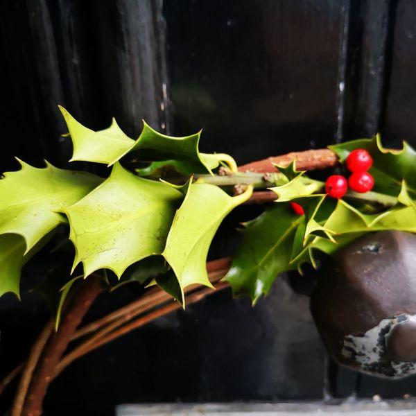 Christmas Decoration Leaf Close-up Plant