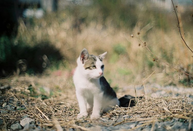 Photography Camera 35mm Film Filmphotography Film Eyemphotography Cat Japan Photo