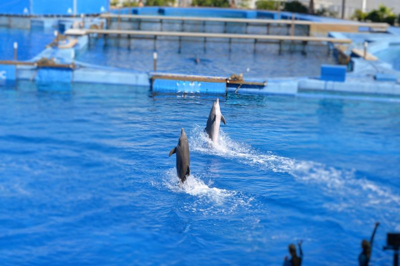 Acquario Acquariodivalencia Animal Wildlife Animals In The Wild Beauty In Nature Day Delfinario Delfines  Esibizione Men Nature Oceanographic Outdoors People Pesci Piscina Sea Water Waterfront