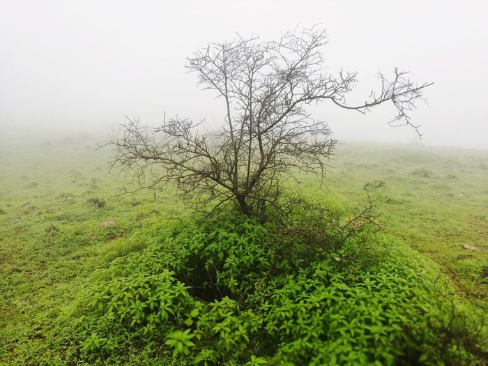 Outdoors Nature Grass No People Fog Green Color Day Landscape Beauty In Nature Freshness Sky Oman Salalah 🇴🇲