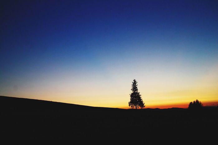 夕暮れ 茜色 グラデーション マジックアワー クリスマスツリー の 木