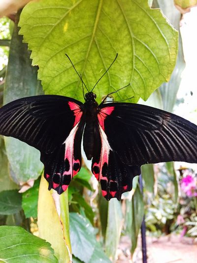 Wildlife EyeEm Best Shots Nature Insect Close-up Butterfly Animal Wildlife Flower Outdoors Nature Beauty In Nature No People Day