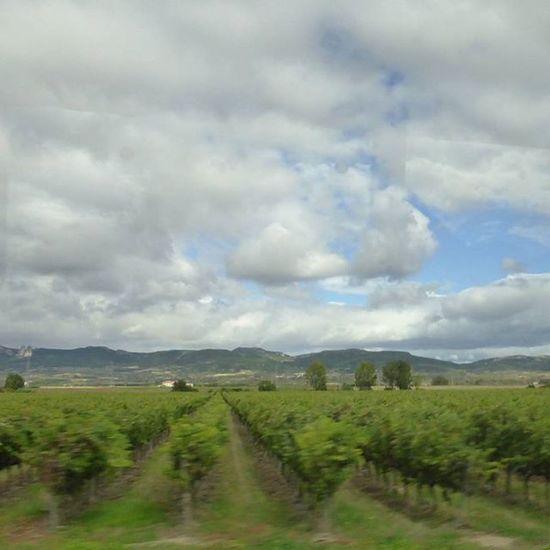 Viñedos. Haro Larioja Skylovers Nubesdehoy turismo travel viñas