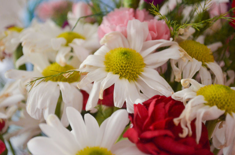 Daisy Daisies Daisy Flower Daisy 🌼 Flower Flowers Fresh Freshness Plants And Flowers Onthetable Close-up Focus On Foreground Colorful Still Life White Selective Focus Decorations Decoration Indoors  Interior Decorative Homedecor Home Interior Decoration Red