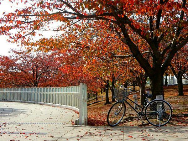 Autumn Japan Lovejapan Niigata-shi Niigata CoolPixS9900 The Changing City