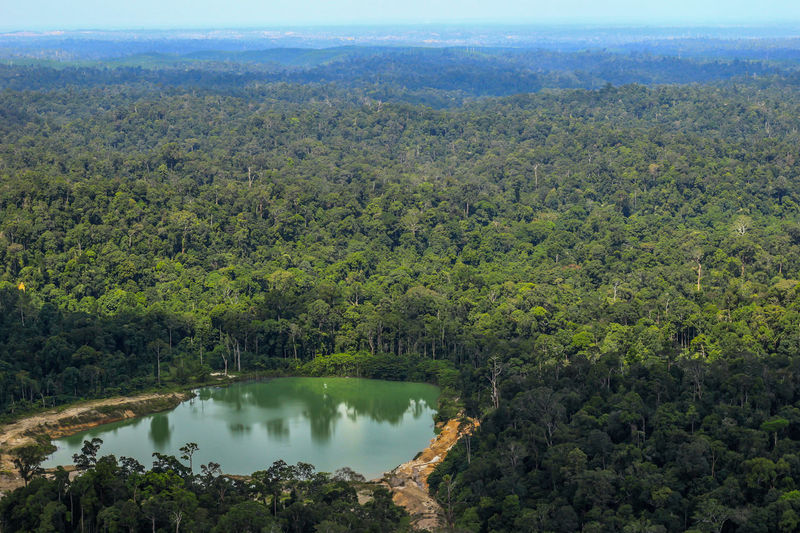 Borneo forest from high agle view Beauty In Nature Forest Green Color Growth High Angle View Landscape Mountain Nature No People Outdoors Scenics Sky Tranquil Scene Tranquility Tree Water