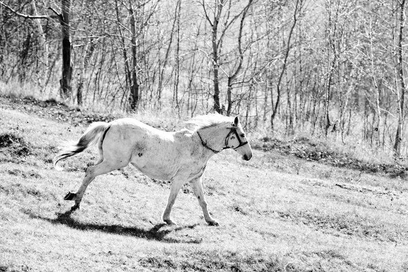 Horse running on grass
