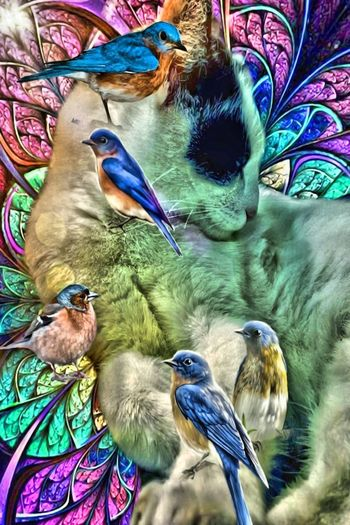 peaceful friends - test hdr effect HDR Effect Cats Cats And Birds Friends Forever Edersee Germany Edersee Sperrmauer Edersee Lichtblicke Nature Naturelovers Birds🐦⛅ NATURE IN YOUR DOORSTEP Collage Art Bird Multi Colored Parrot Beak Gold And Blue Macaw Close-up Visual Creativity EyeEmNewHere