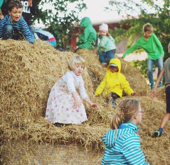 Children Childhood Children Photography Summer Farm Farm Life Thatch Fun