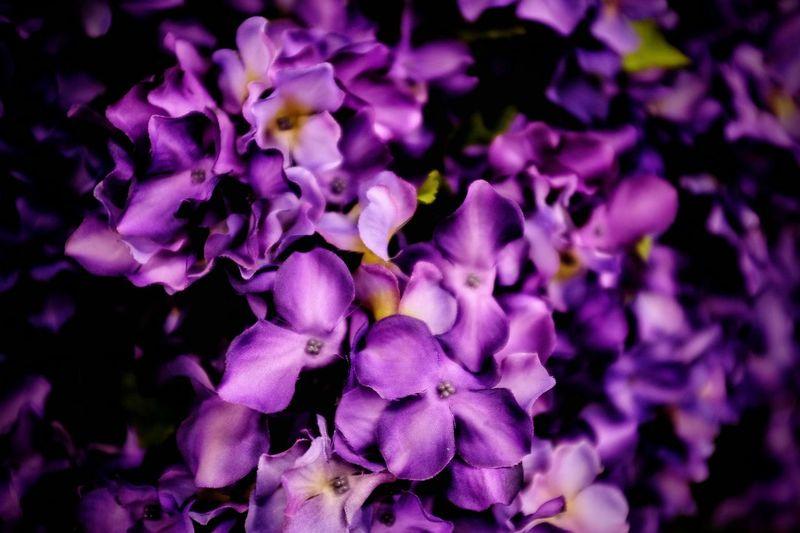 Visual Journal December 2016 Nebraska Artificial Artificial Flower Camera Work Color Photography Ersatz Fake Flowers FUJIFILM X-T1 Photo Diary Purple Purple Flowers Shopping Visual Journal