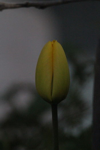 Close-up of white flower buds