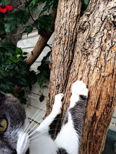Close-up of cat by tree