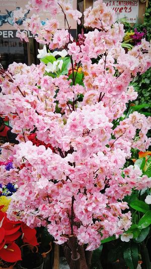 Nature Beauty In Nature Freshness EyeEmNewHere EyeEm Nature Lover Cherry Blossoms Shopping ♡ FeelingFresh