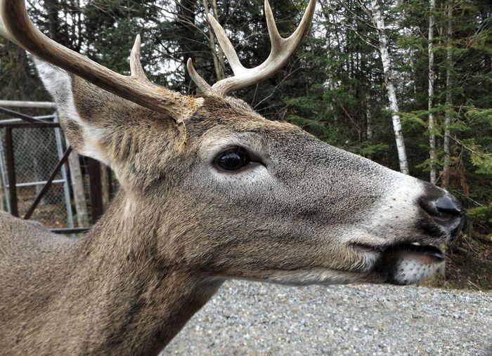 Deer Outdoors